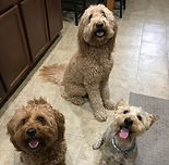 Kona, Roscoe and Murphy.jpg