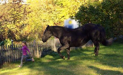 TAO #cheval #equi #équithérapie #équicoaching #carolinediguet#management #ressources #intéligenceémotionnelle
