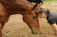 2014 05 28 cheval alexandre 085.jpg