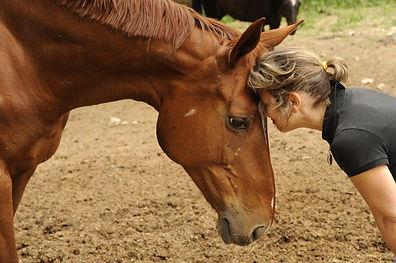 #cheval #connexion #equithérapie #équicoaching #management #carolinediguet #ressources