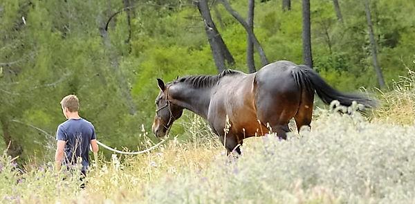 #cheval #leader #intelligenceémotionnelle #équithérapie #équicoaching #management #carolinediguet