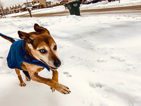 Don't Let Your Dog's Tail Drag This Winter