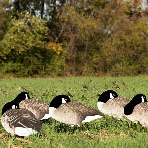V2F Sleeper (Flocked) Canada Silhouettes