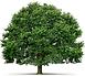 Menos papel, mais árvores!