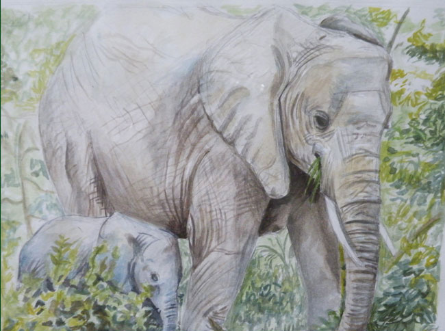 elephant, watercolor
