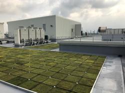 屋上 緑化