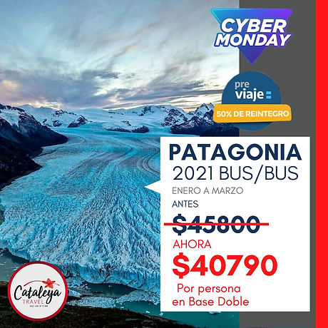 Patagonia BusBus Cyber Monday.jpeg