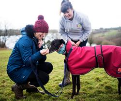 Dog Training In Falmouth, Treat Training, Pink Dog Coat, Praise and Paw Dog Training