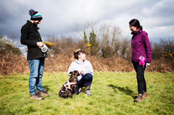 Dog Training, Working with Canine Behaviourist, Falmouth Cornwall