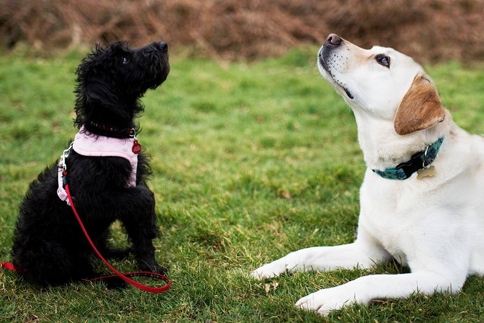 Puppy Training, Dog Training, Falmouth, Cornwall, Teenager Dogs,
