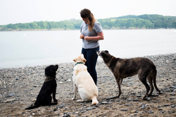 Dog Training Classes, Obedience Dog Training, Teach Your Dog to Listen