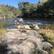 Platypus in the Mitta Mitta River – have you seen one?
