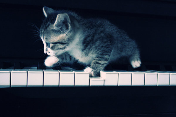 cat_who_play_the_piano_by_gnce.jpg