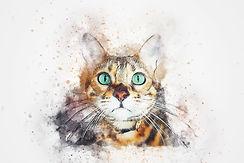 cat-2573818_1920.jpg