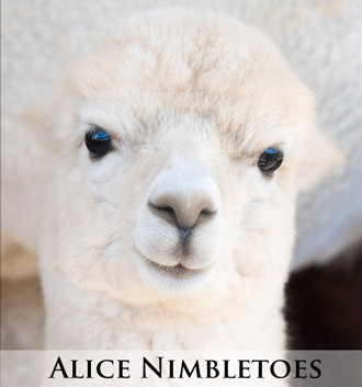 Alice Nimbletoes - Tier 2 Adoption
