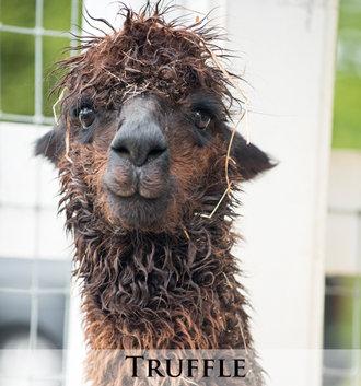 Truffle - Tier 2 Adoption