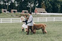 106_Bluebird-Farm-Alpacas-Engagement-AV.
