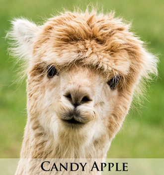 Candy Apple -Tier 2 Adoption
