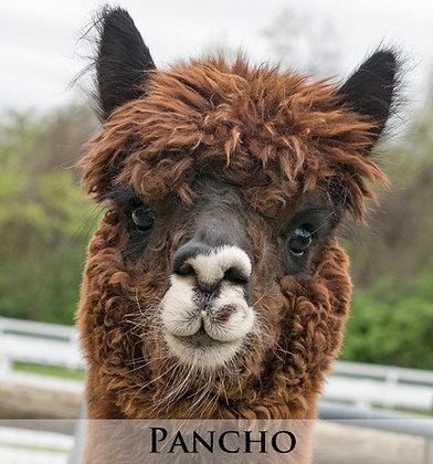 Pancho - Tier 2 Adoption