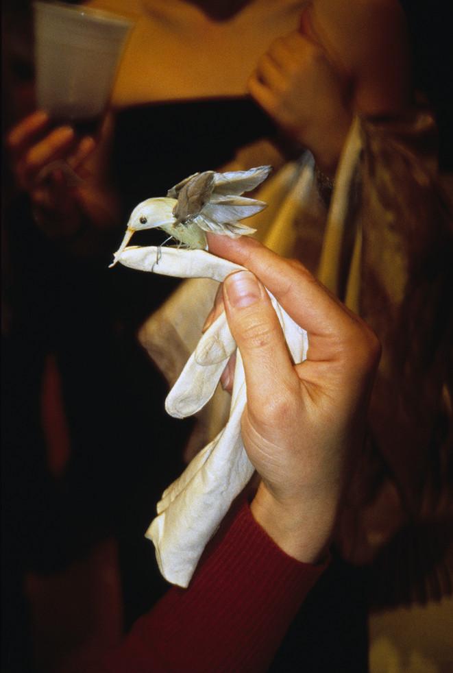 Hummingbird glove.JPG