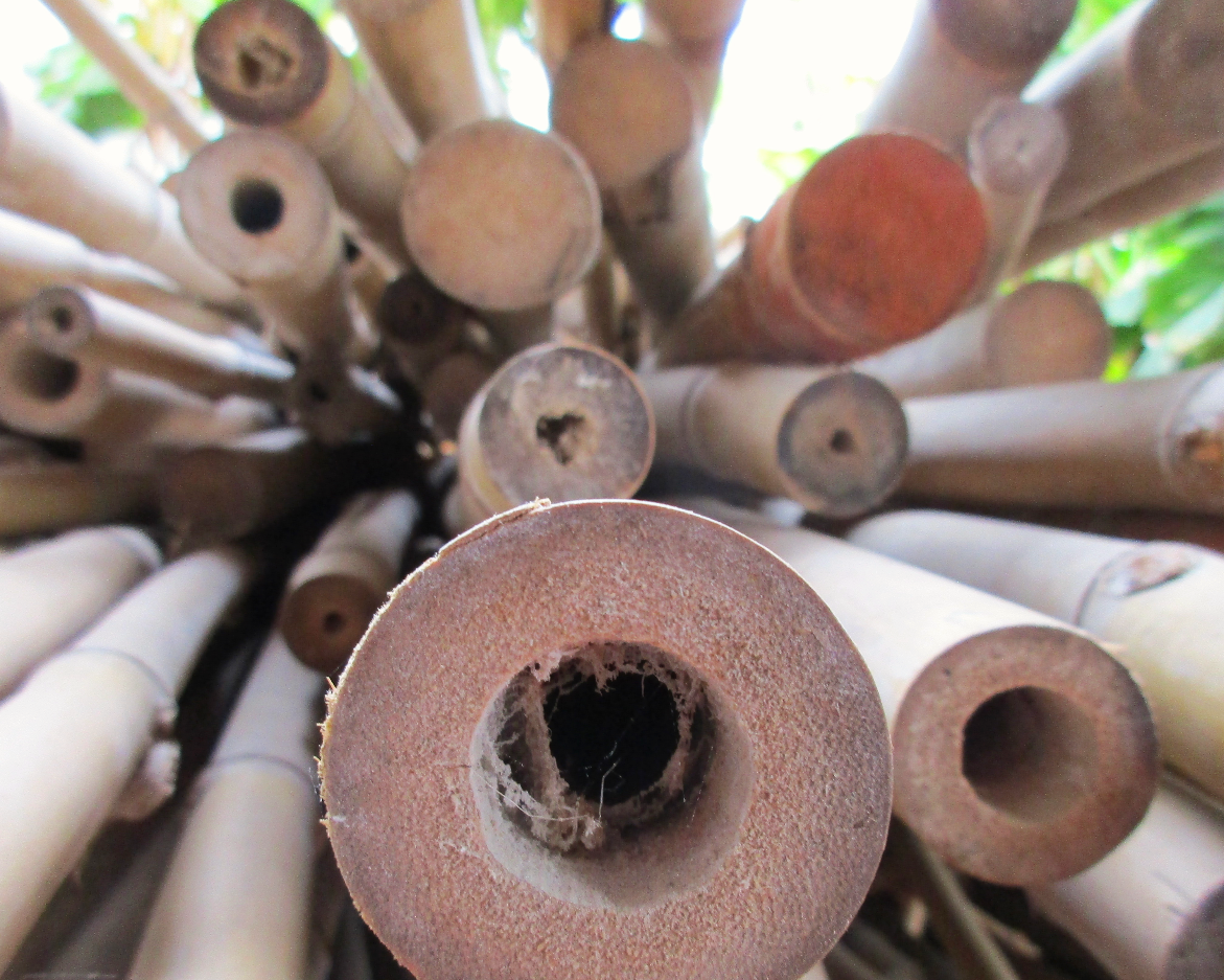 Raw material bamboo
