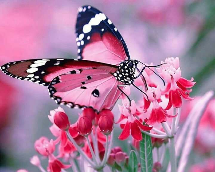 picture-of-butterfly-14