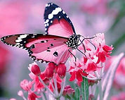 picture-of-butterfly-14.jpg