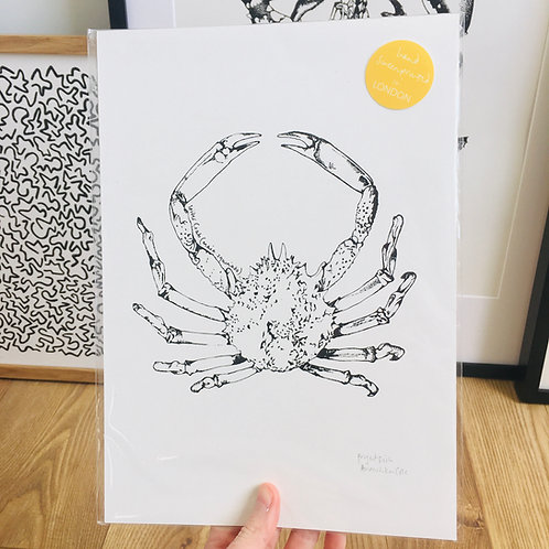 A4 Spider Crab Print