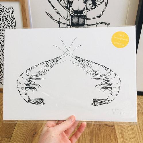 A4 Fighting Shrimp Print