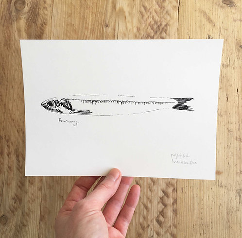 A5 Anchovy Screen Print