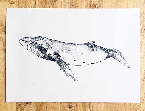Large Humpback Whale Screen Print