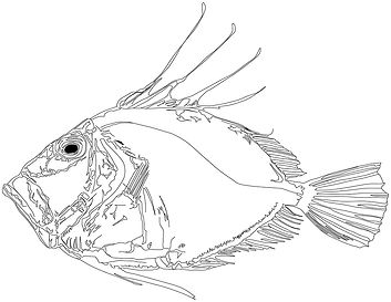 johndory illustrator smaller.jpg