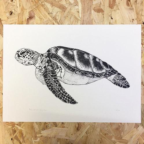 A3 Sea Turtle Print