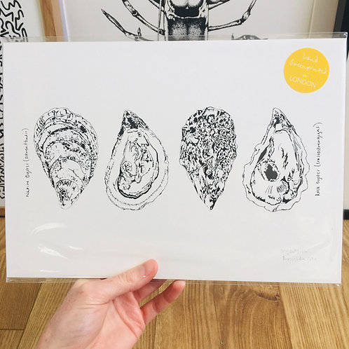 A4 Oyster Print