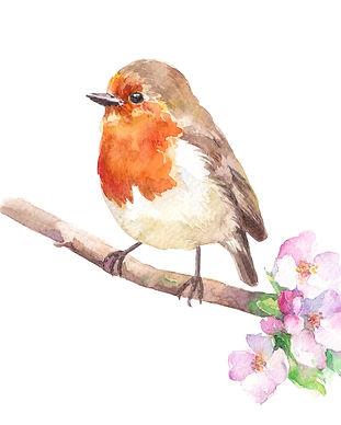 robin-redbreast-bird-cherry-blossom-bran