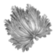 PAIKKA black and white leaf