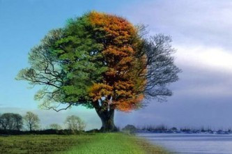 4-seasons-1-tree-333x221.jpg