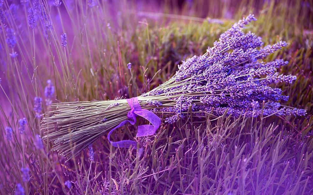 bunch-lavender-1680x1050.jpg