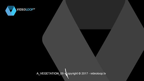 VideoLoop.tv | Three vectorized plants growing