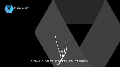 VideoLoop.tv | Growing vectorized flowers
