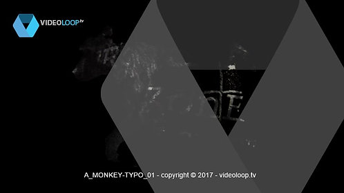 VideoLoop.tv | A monkey incrusted in typography