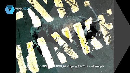 VideoLoop.tv | A pig incrusted in typography