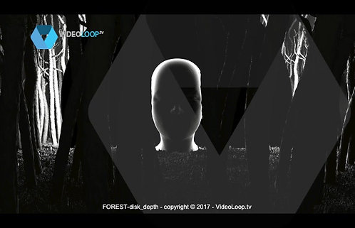 Videoloop.tv | Nature |  Forest