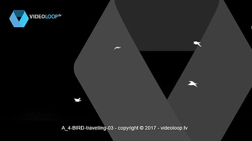 VideoLoop.tv | Four birds fly from right to left