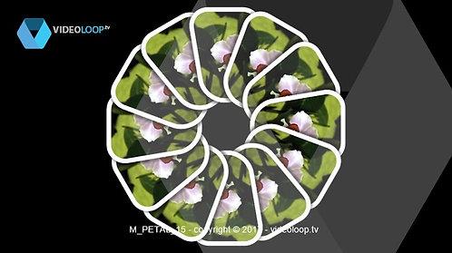 VideoLoop.tv | A flower card game created a mandala