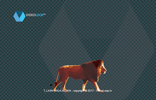 Videoloop.tv | Nature |  Animal | Tiled Lion