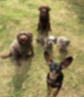 Sunday funday ☺️🐾 #wilsonswagtails #dog