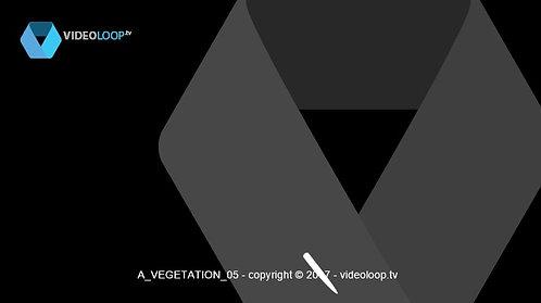 VideoLoop.tv   Vectorized leaves grow