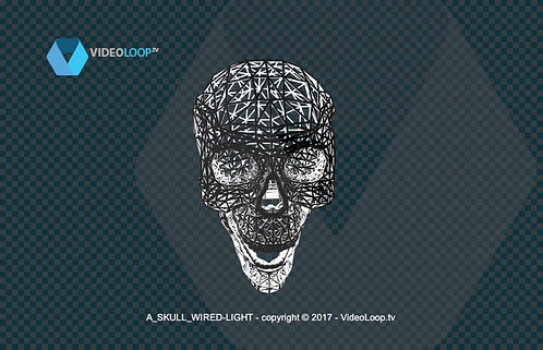 videoloop.tv | A 3d wired skull
