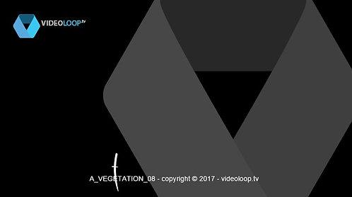 VideoLoop.tv | Vectorized leaves growing